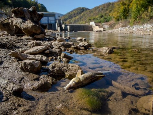 New study confirms hydropower plants have a devastating impact on fish populations in rivers around the Mediterranean. Numerous species are threatened with extinction.. Hydropower plants are one of the main causes for the decline ofnumerous fish species i...