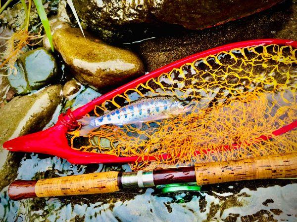 Summer fishing.