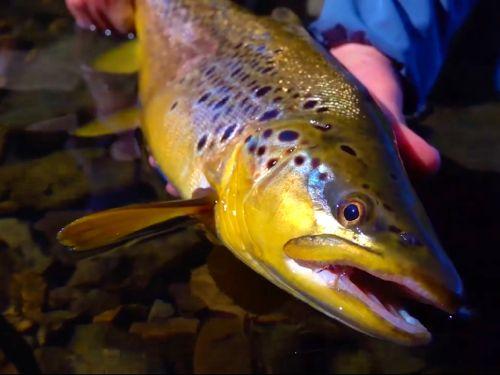 Una interesante charla con Juan Antonio Robleda de la agencia Fly To Fly Patagonia, sobre su vida como pescador a mosca y el trabajo de organizar viajes de pesca.. Fd: ¿Cómo se iniciaron en la pesca con mosca?Recuerdo como a mis 12 años más o menos, p...